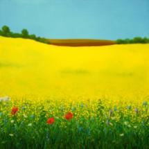 rapefield o2 | oil on canvas, 8o x 8o cm